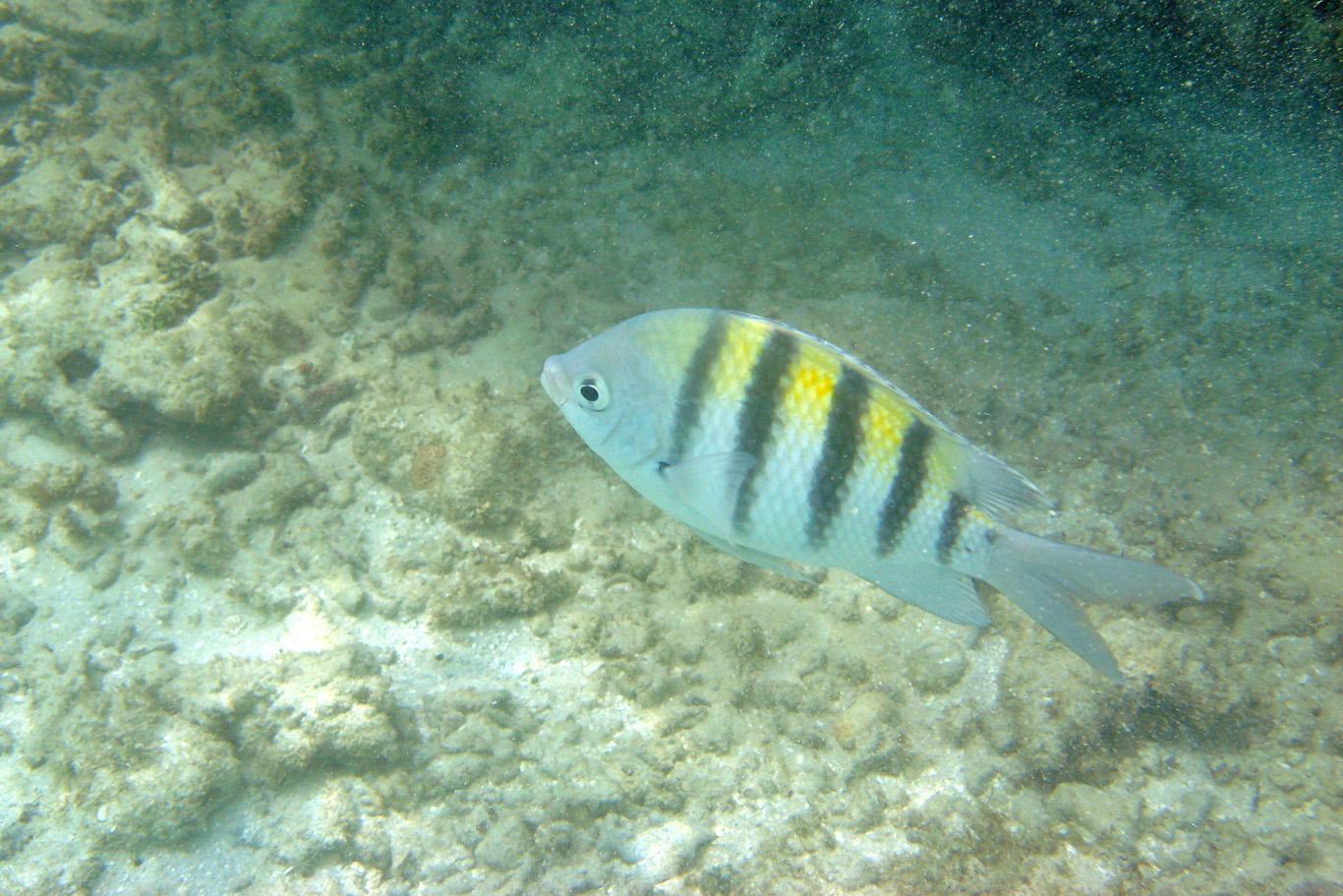 Snorkeling in Maragogi