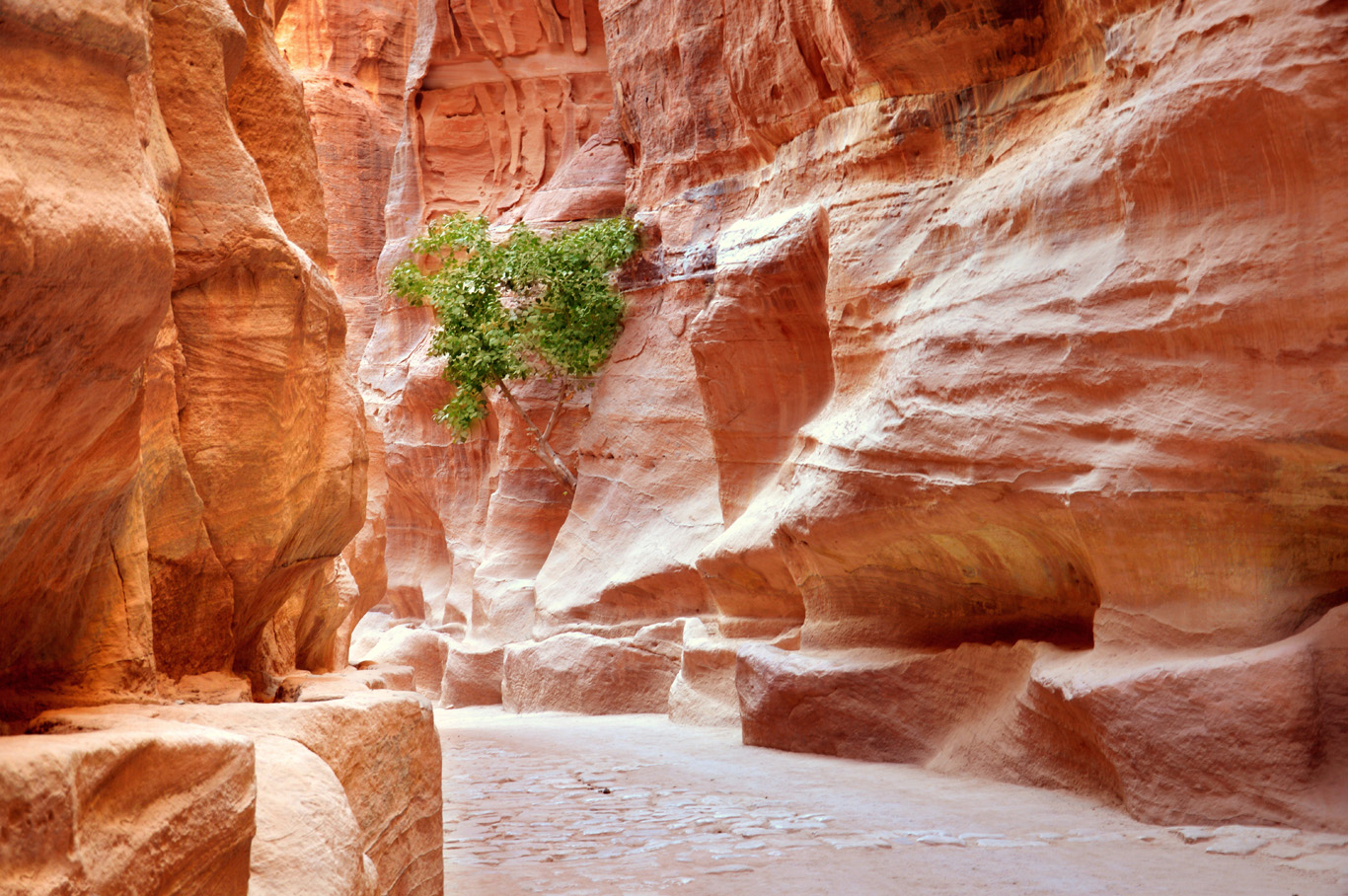 The beautiful siq - the passage leading to Petra