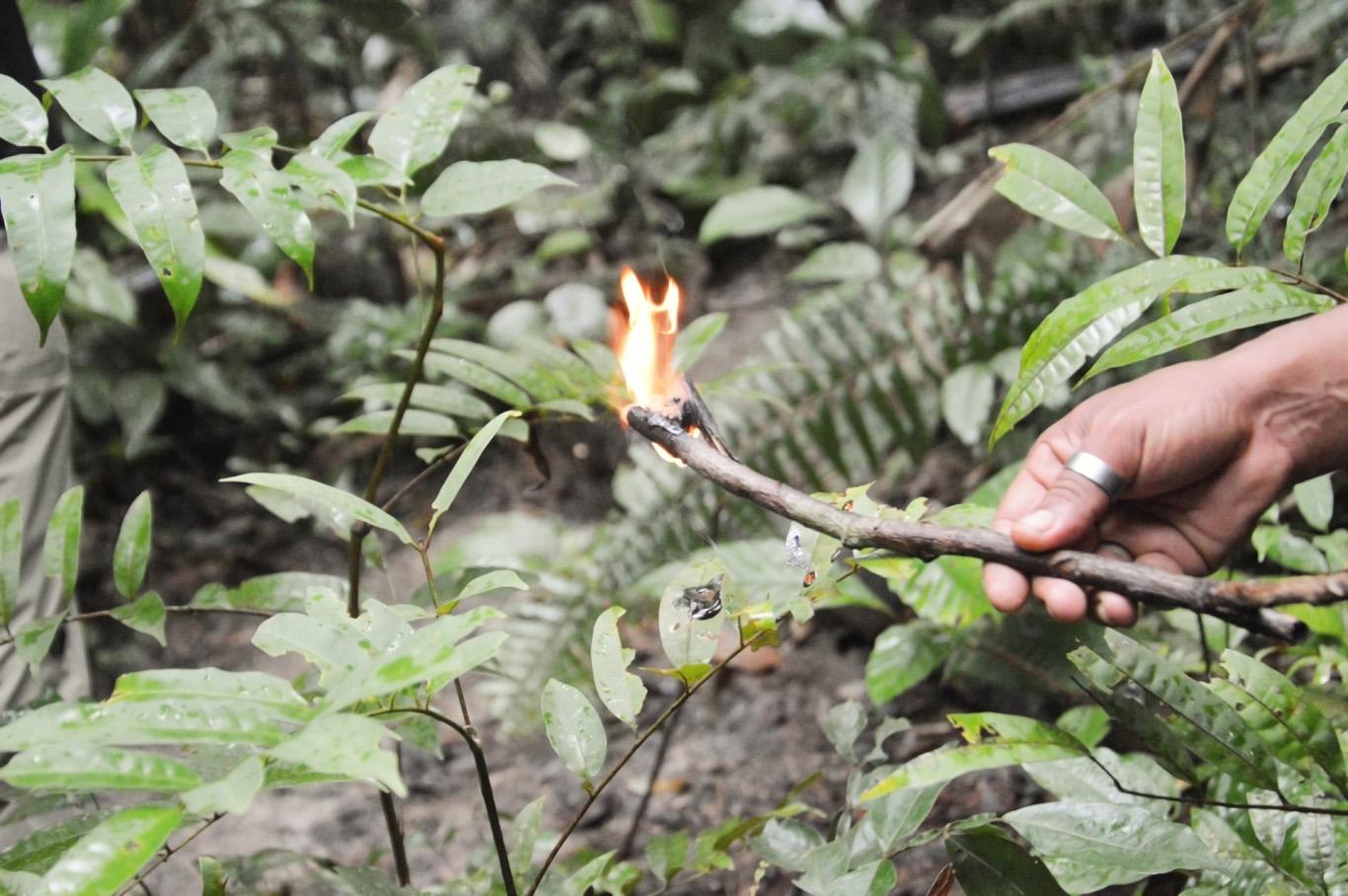 Flammable sap