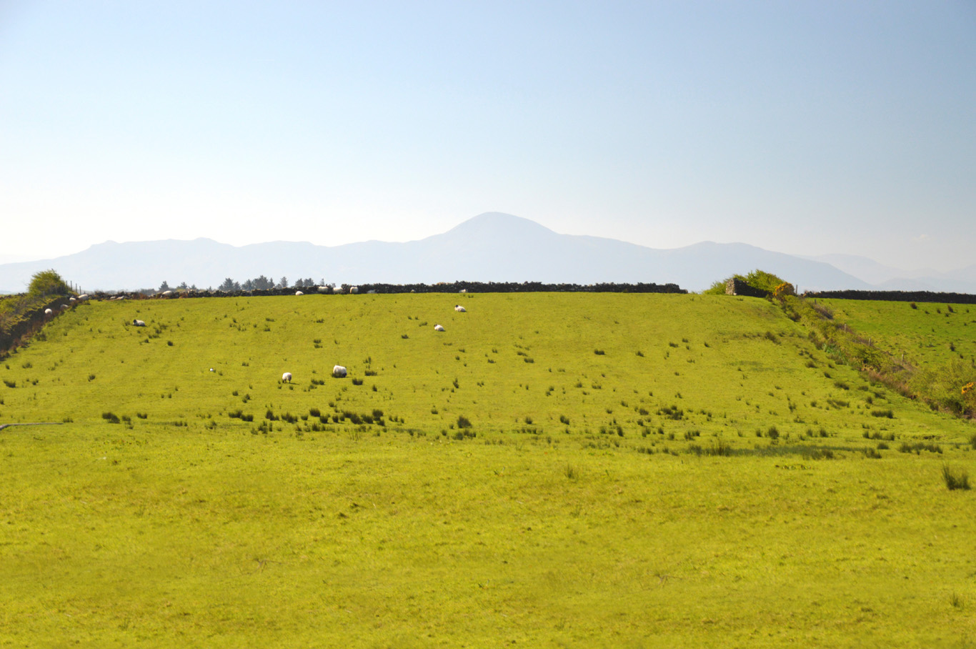 Green fields with sheep