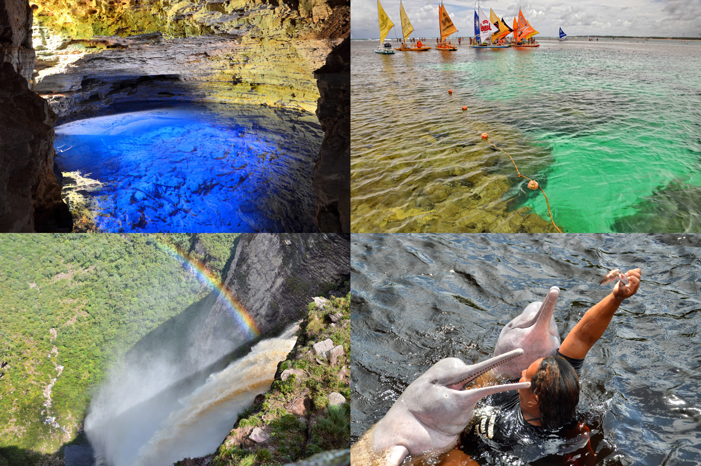 From top left: Poco Azul (Blue Cave) in Chapada Diamantina, Coral Reef Pools in Porto de Galinhsa, Fumaca (smoke) Waterfall and Pink Dolphins in The Amazon