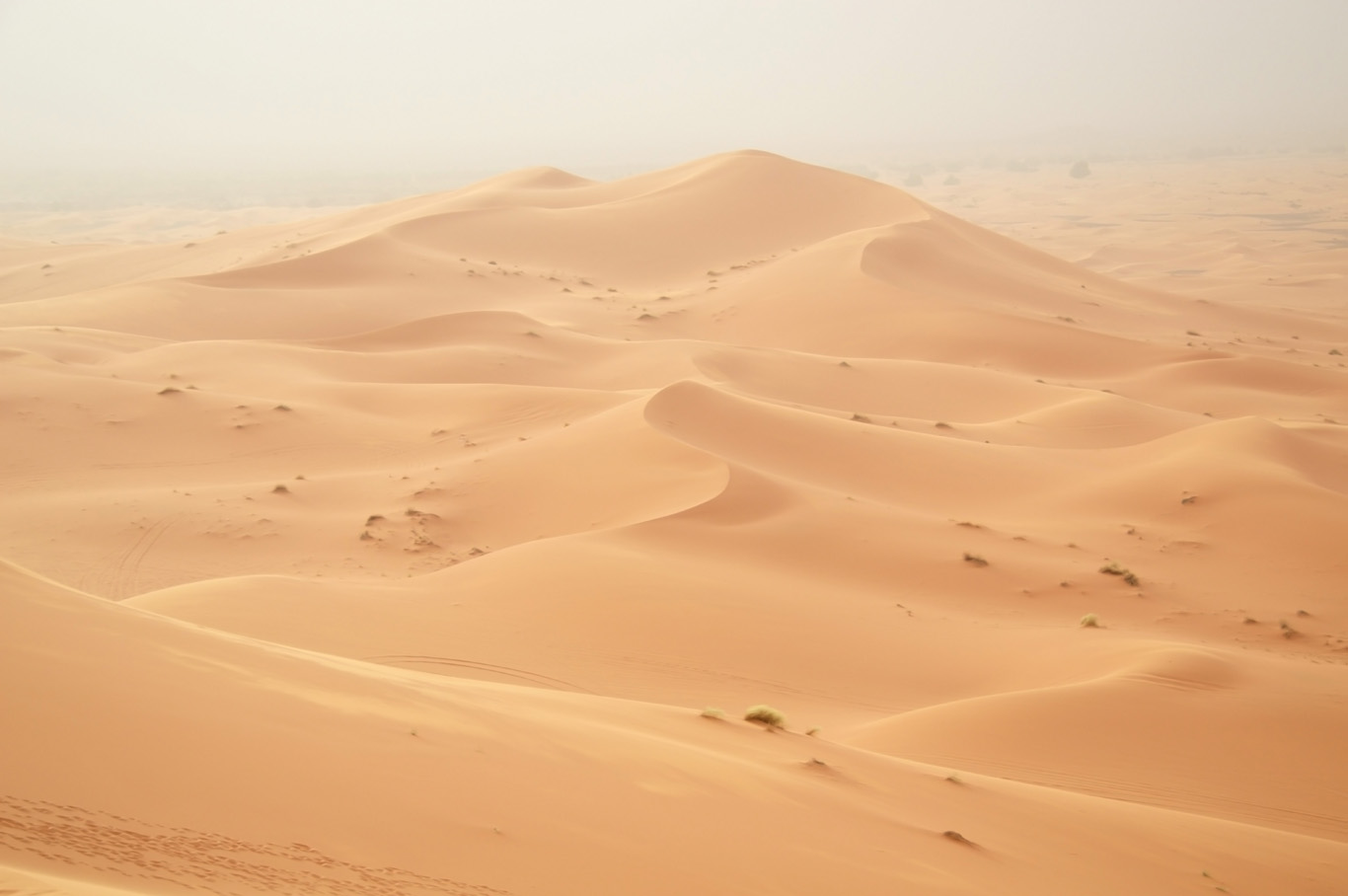 Sandstorm is coming