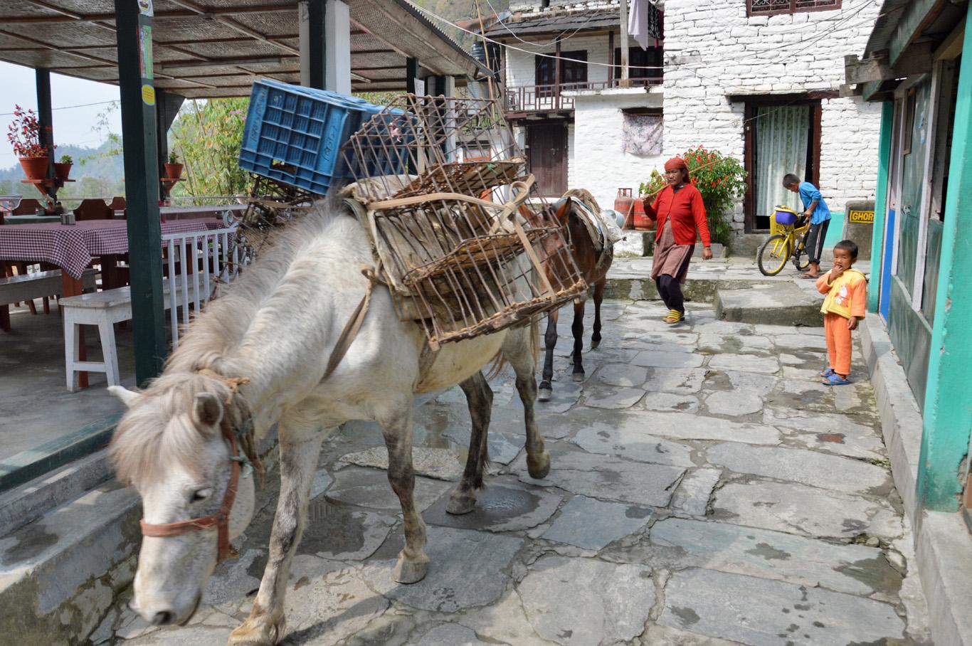 Donkeys used for transporting goods