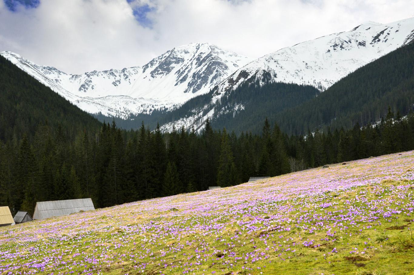 Snowy peaks and flowers