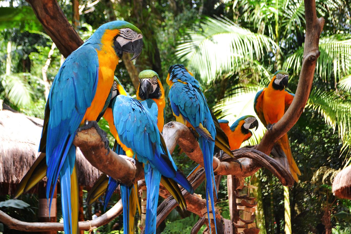 The Bird Park - don't miss it