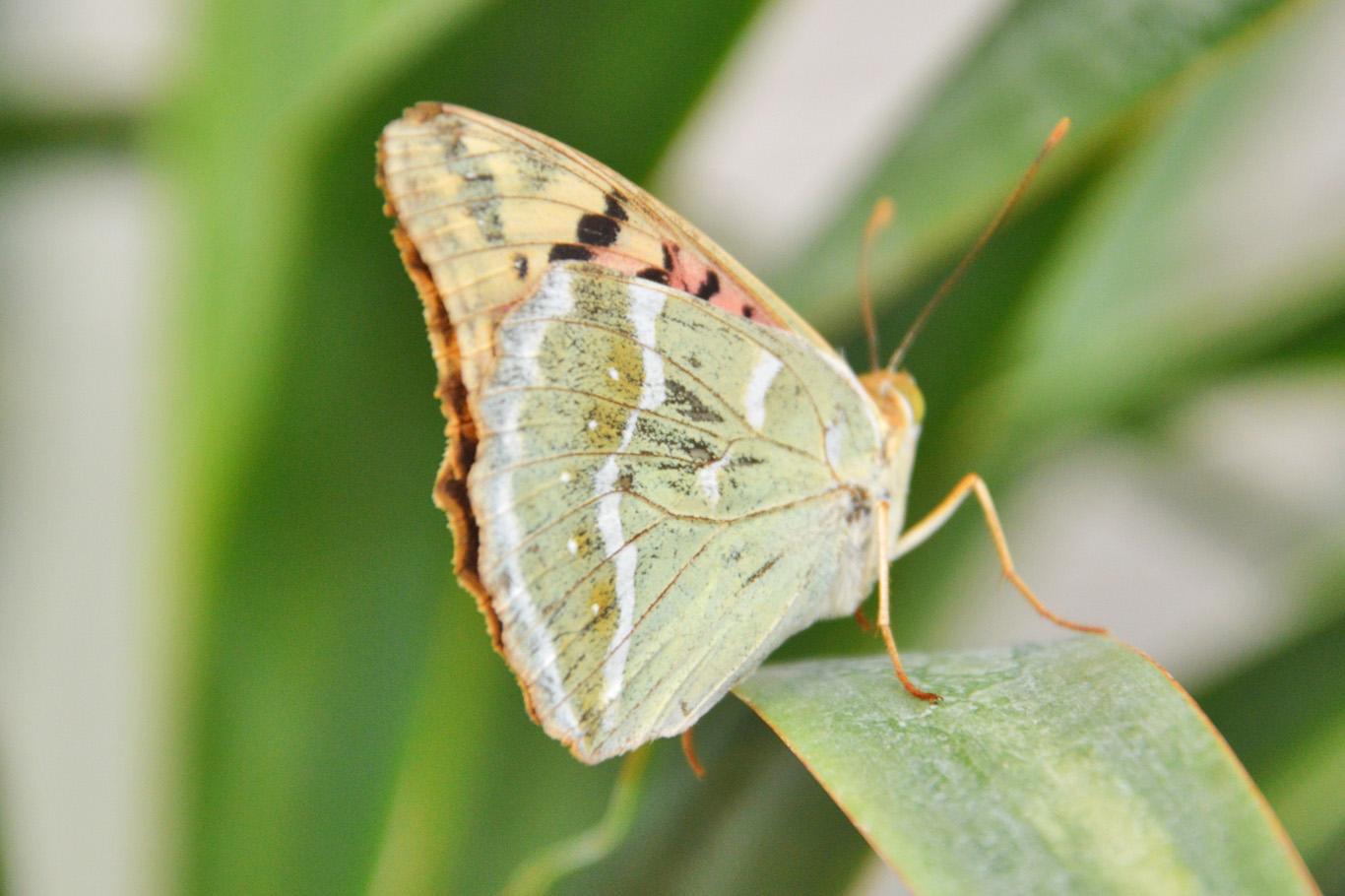 Butterflies in Crimea