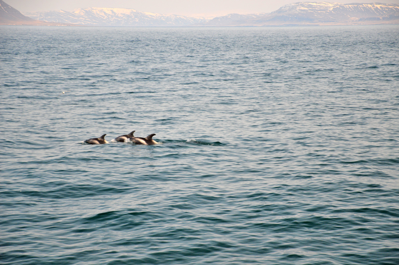 Whale watching - we only spotted dolphins