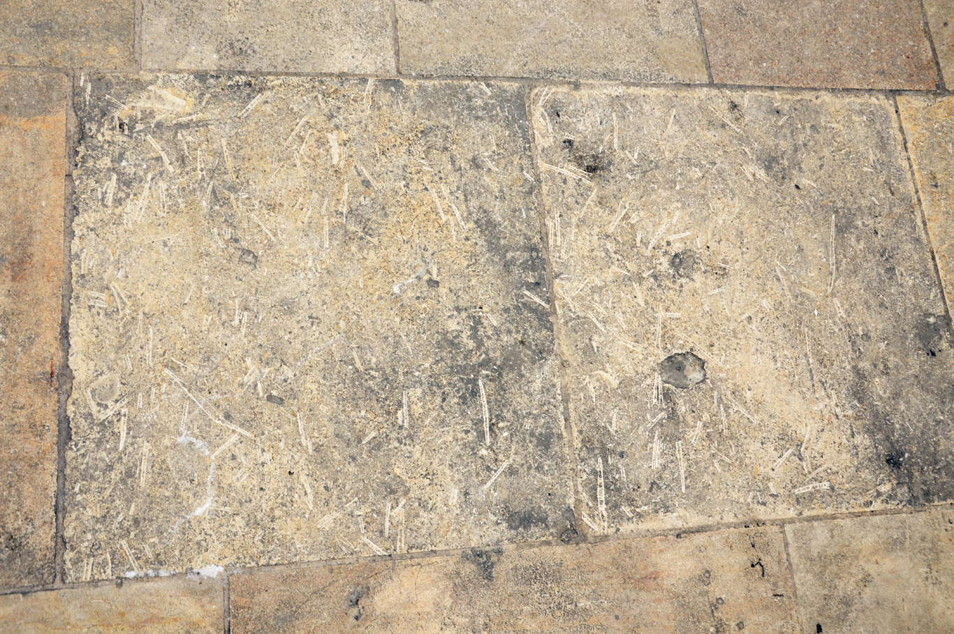 Fossils in the pavement