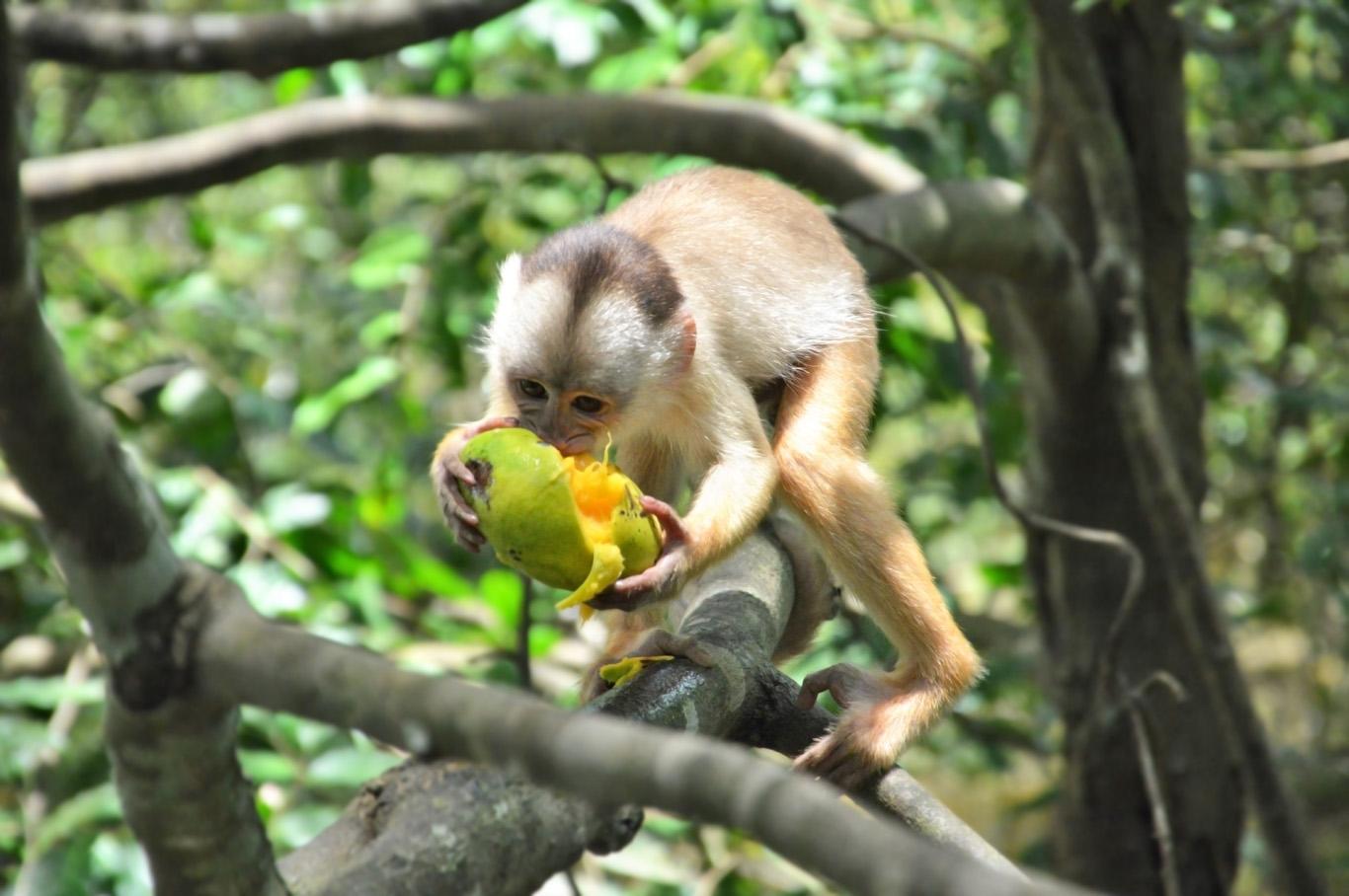 Monkey at lake Januari