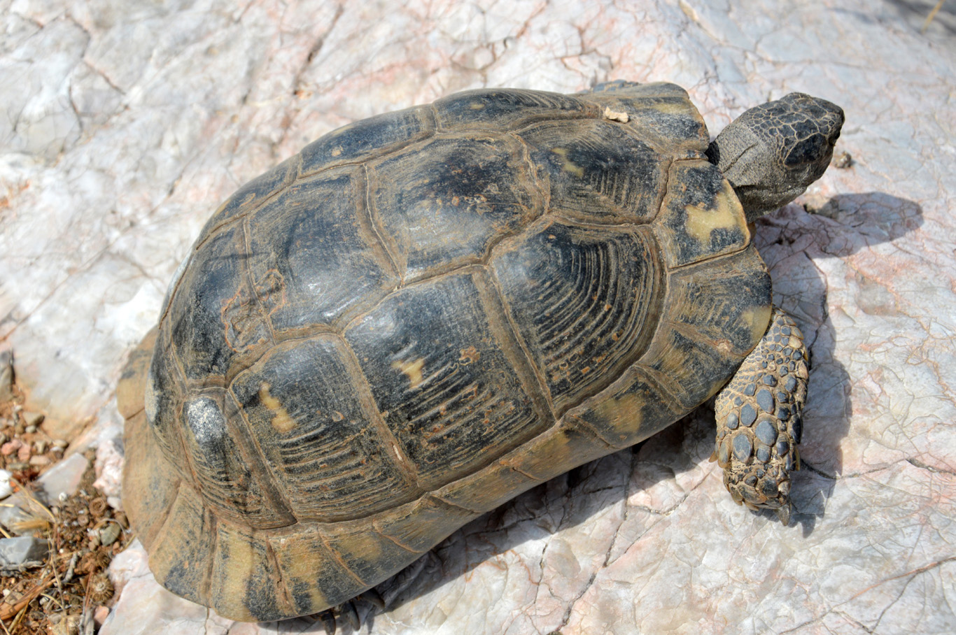 Tortoises can be found everywhere