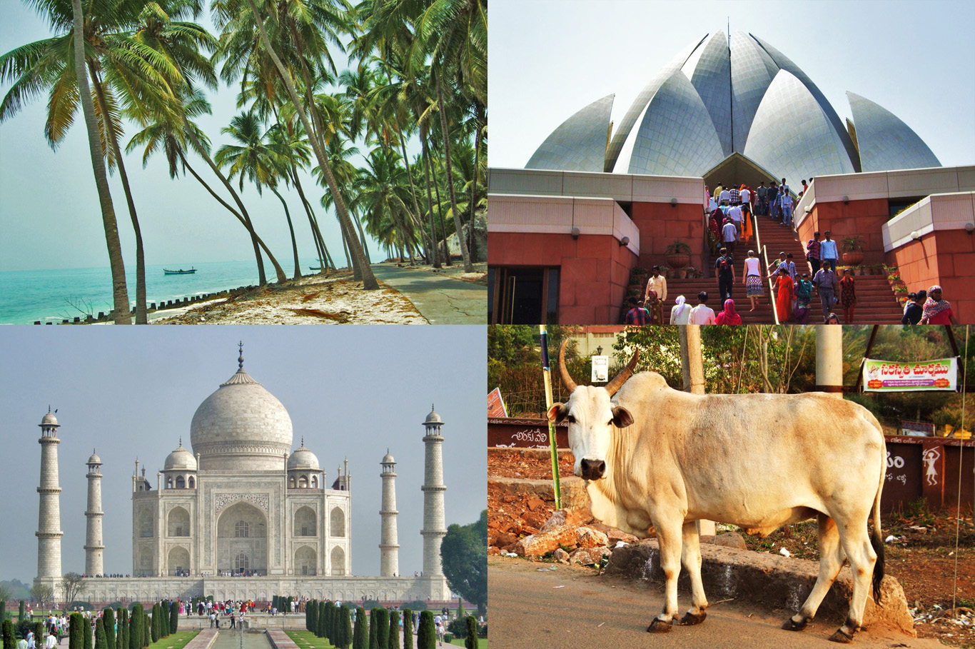 India: a beach in Lakshadweep, Lotus Temple in New Delhi, Taj Mahal in Agra and a bull in Araku Valley