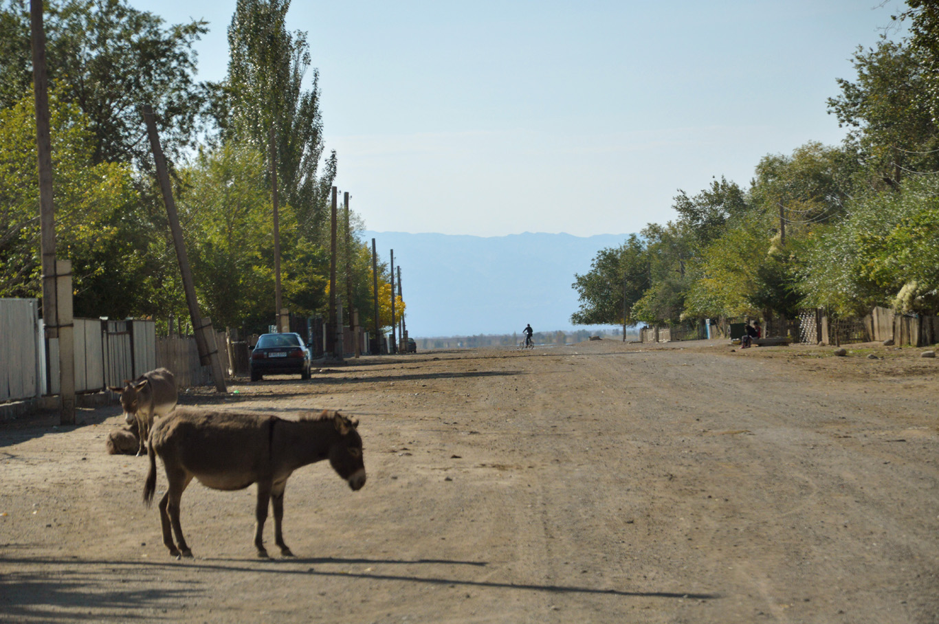 Donkeys in one of the forgotten villages on the way