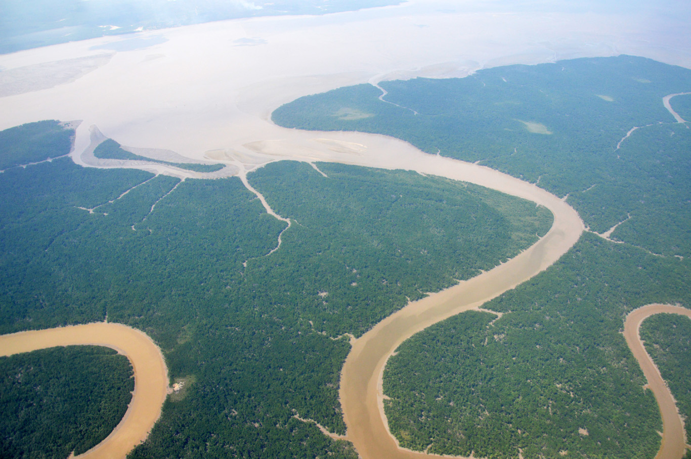 Aerial View of the rainforest