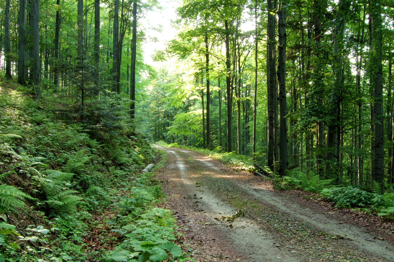 Serbia is full of unspoiled forests