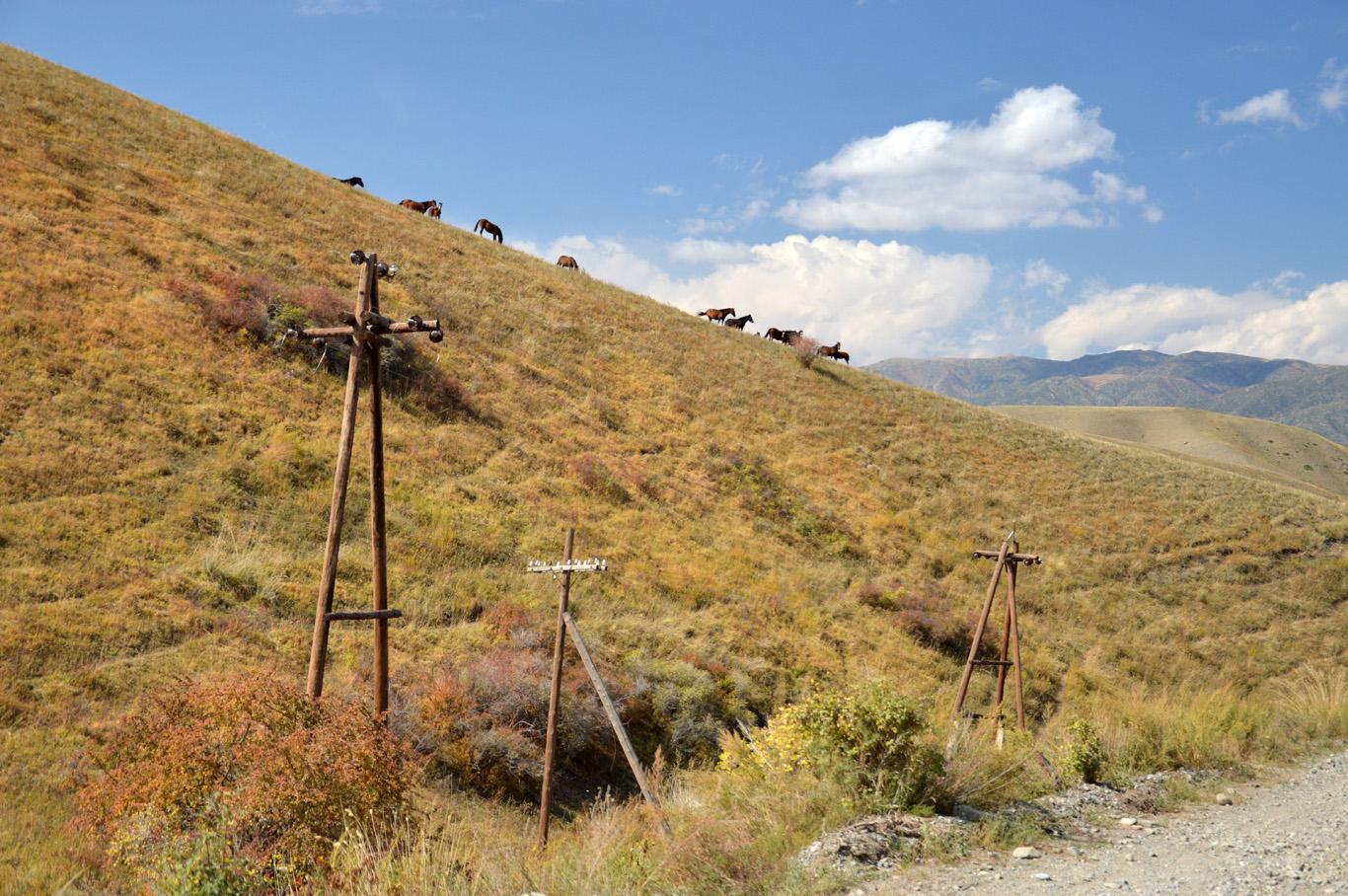 Common sight in Kazakhstan - horses grazing