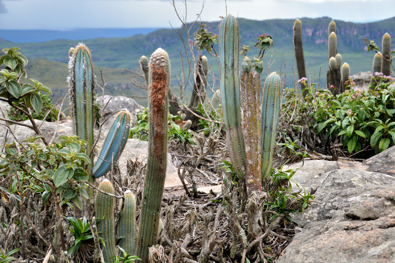 Cactus on top of the hill