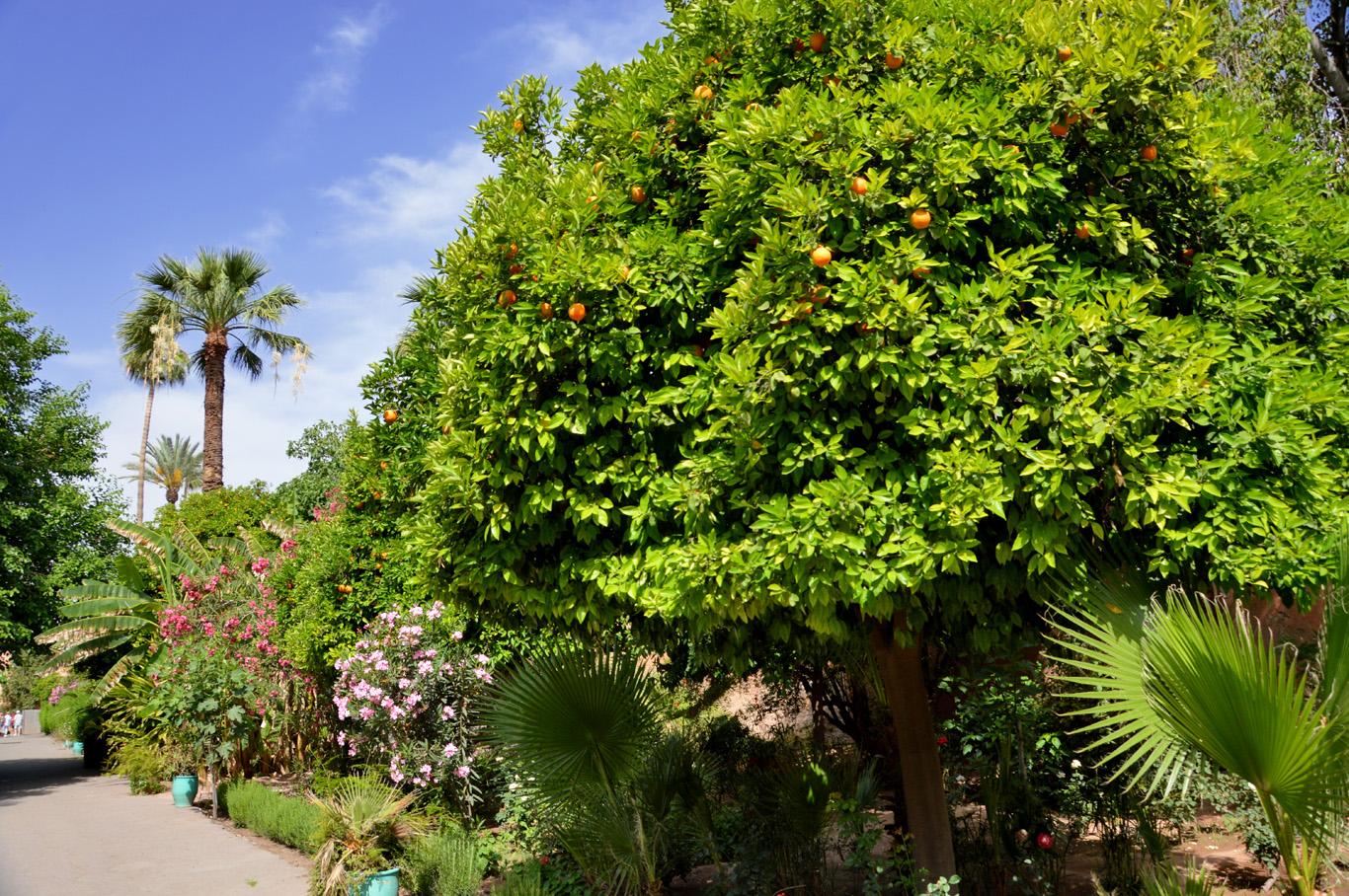 Bahia Palace Gardens
