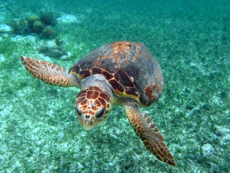 Sea+Turtle.jpg