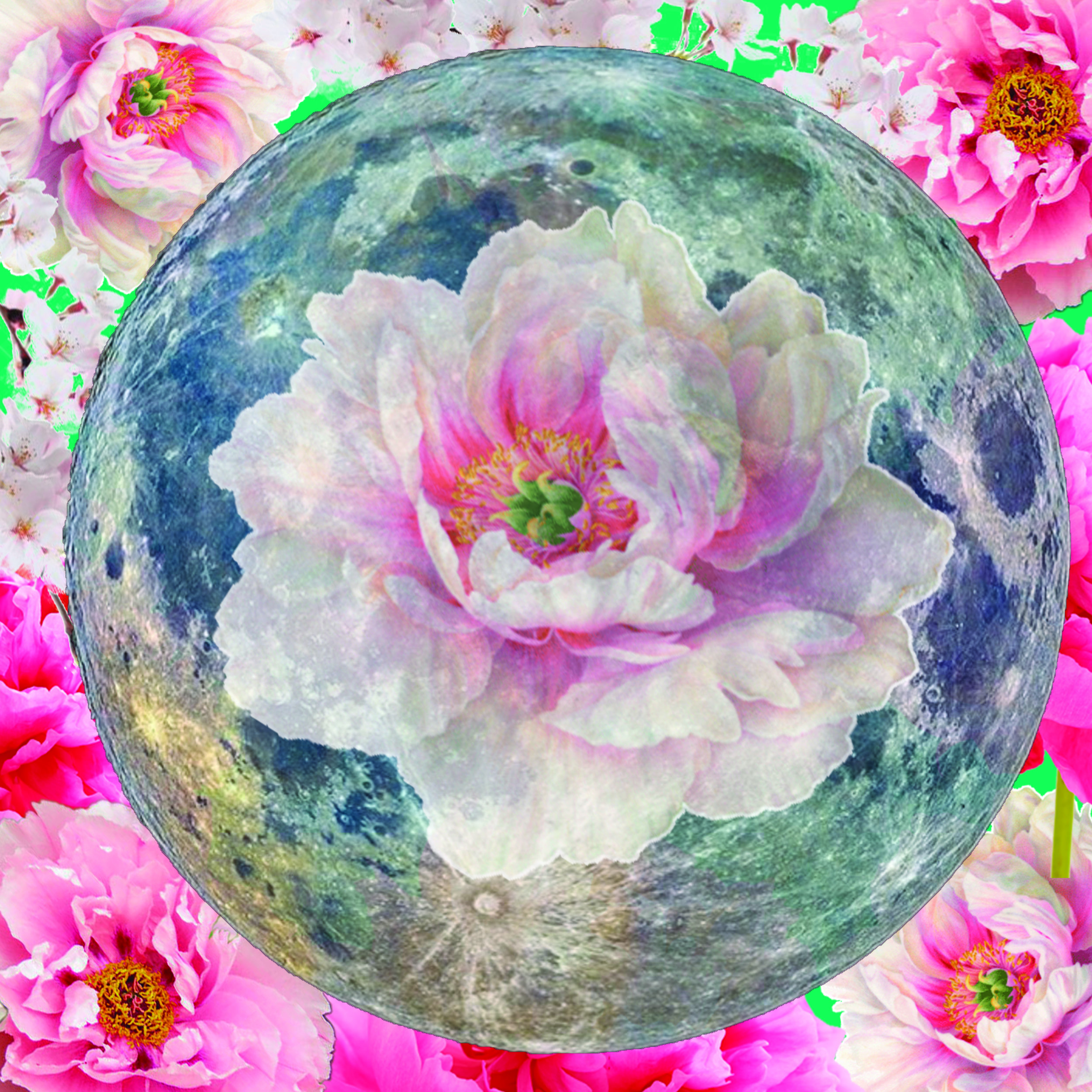 Flower full moon.jpg