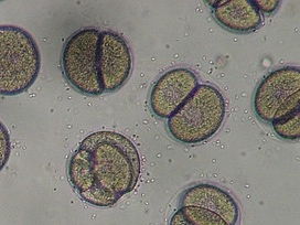 microscope-1276131_640.jpg