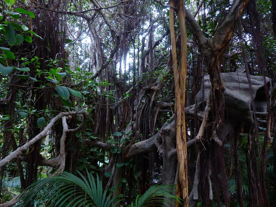 jungle-406780_960_720.jpg