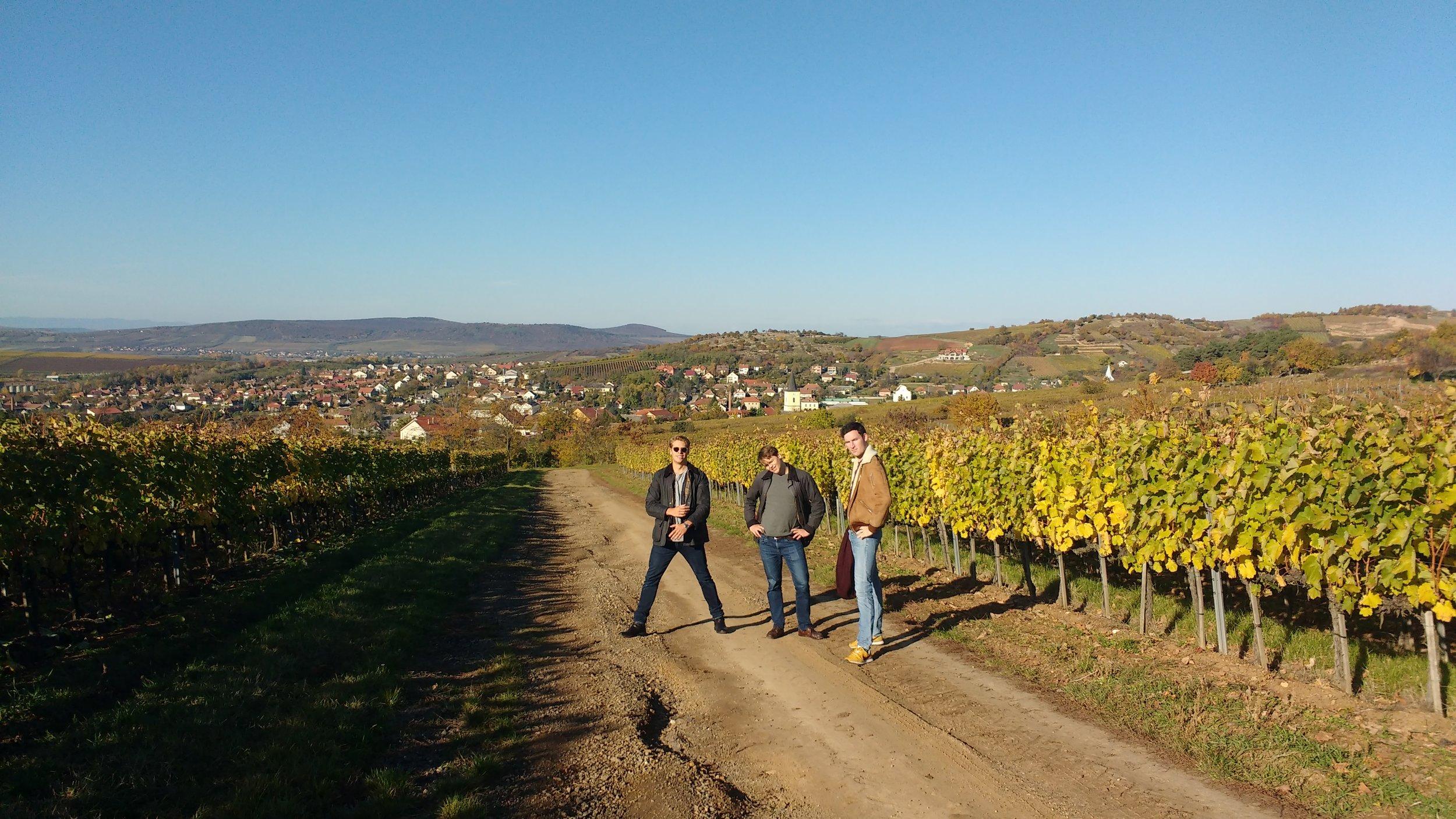 The Szent Tamás vineyard...