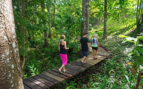 Do your 200 hour ytt in a rainforest