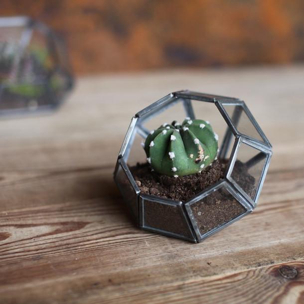 aketa-terrarium-point.jpg