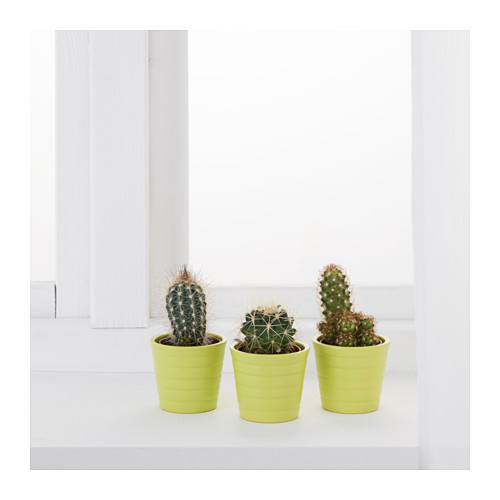 cactaceae-potted-plant-with-pot-cactus-assorted__0443859_pe594583_s4.jpg