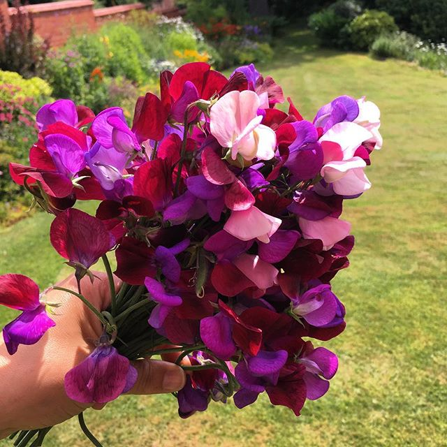 Heavenly #sweetpeas  #summer
