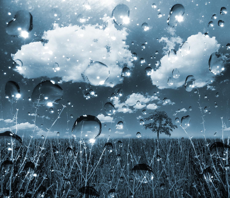 acid rain copy.jpg