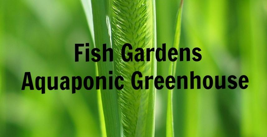 Fish Gardens Aquaponic Greenhouse