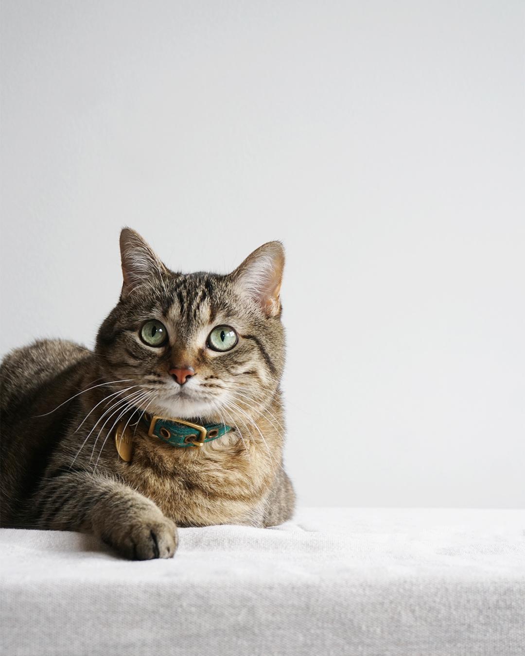 Rory Cat