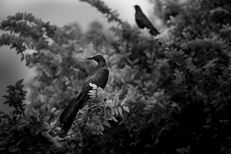 Birds in Tree, Austin, Texas © Robert Welkie