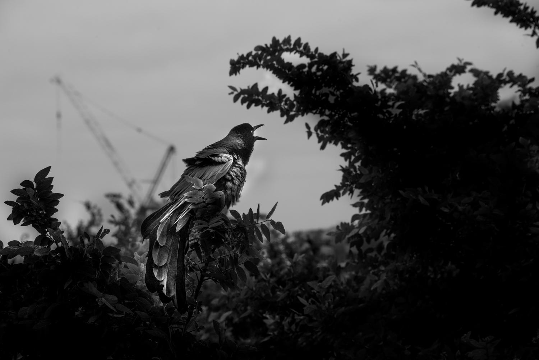 Bird, Crane and Dinosaur, Austin, Texas © Robert Welkie 2016