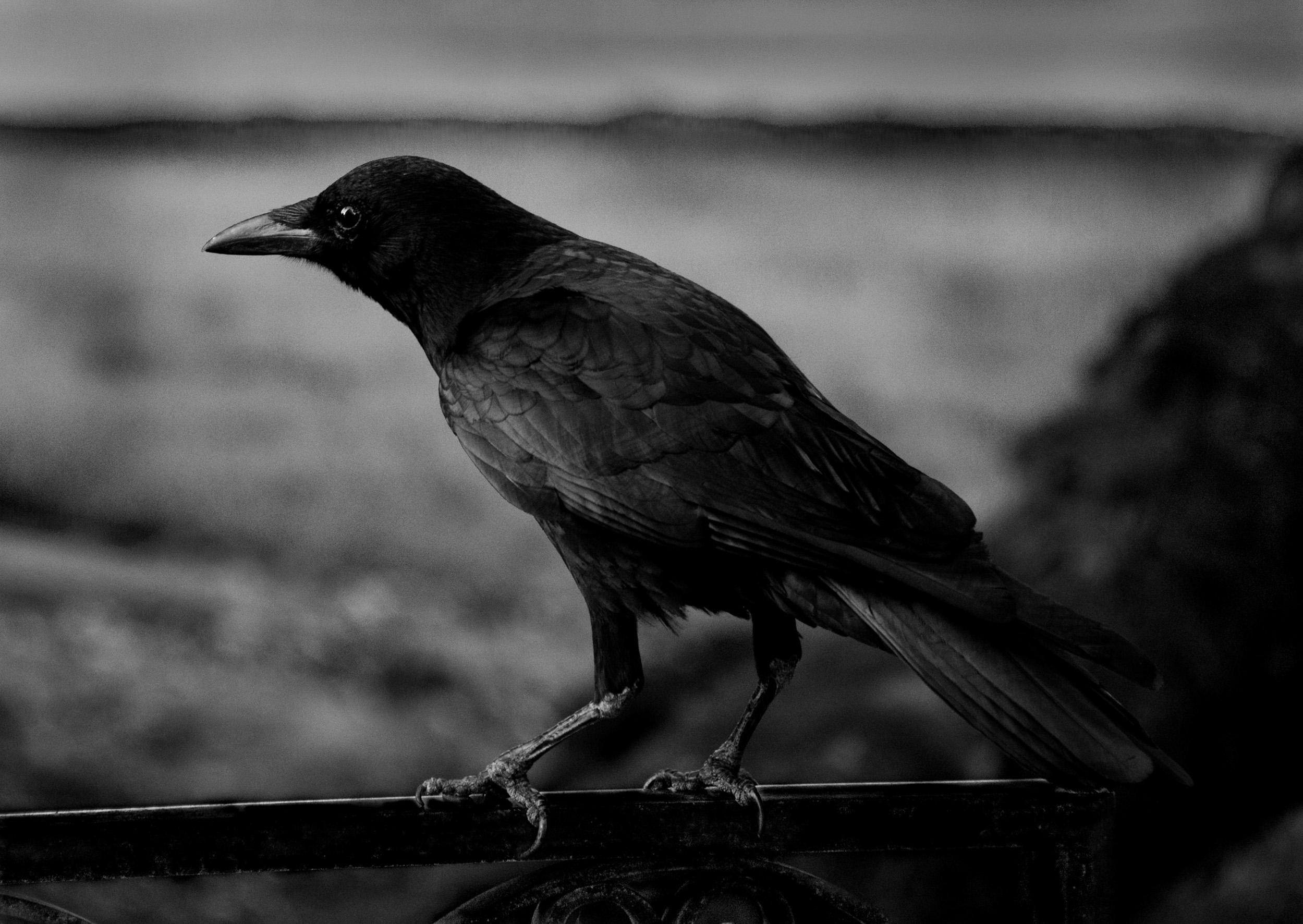 Bird at the Timken Museum, San Diego, California  © Robert Welkie 2018