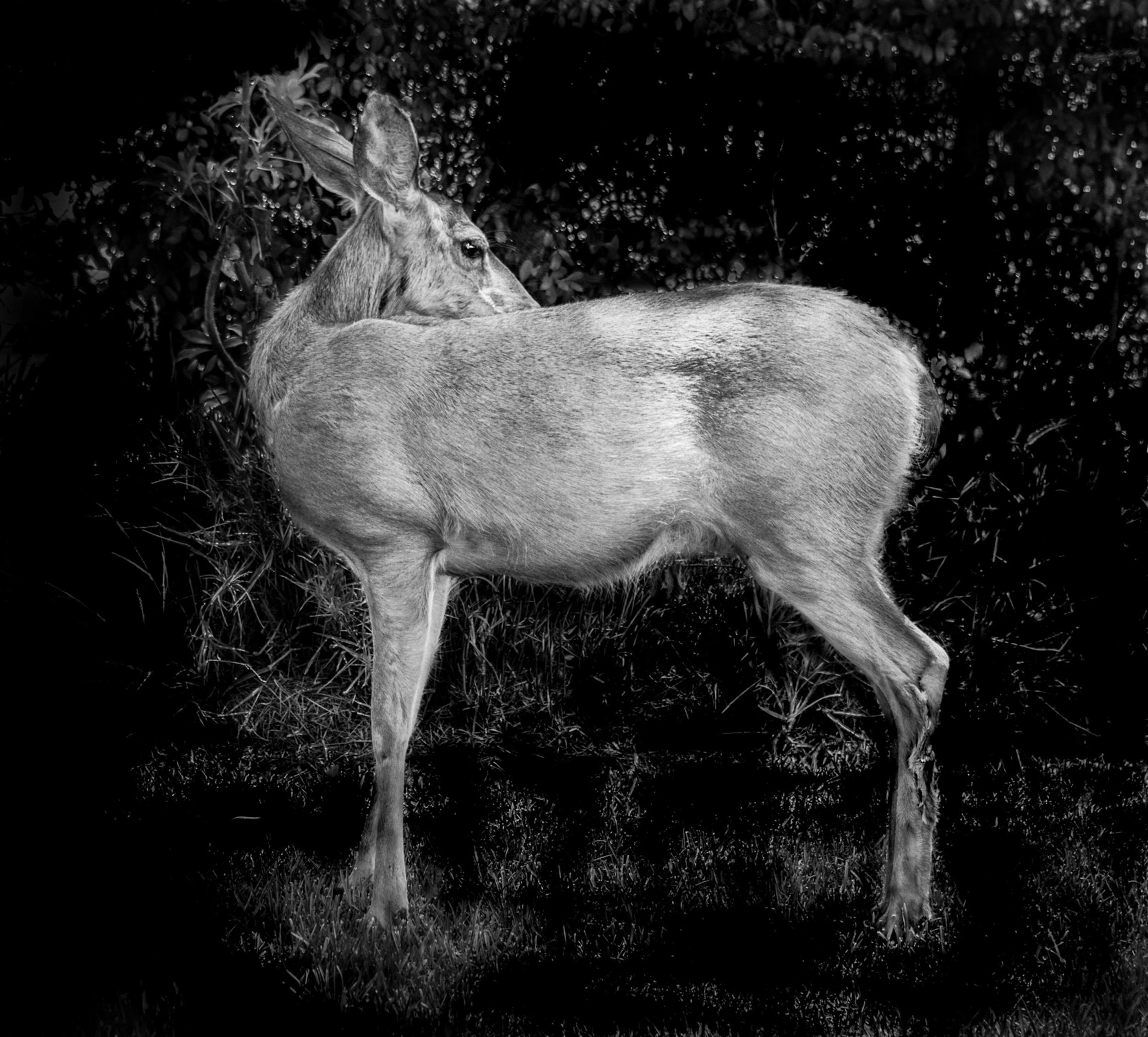 Deer Turned, Monrovia, California © Robert Welkie 2018