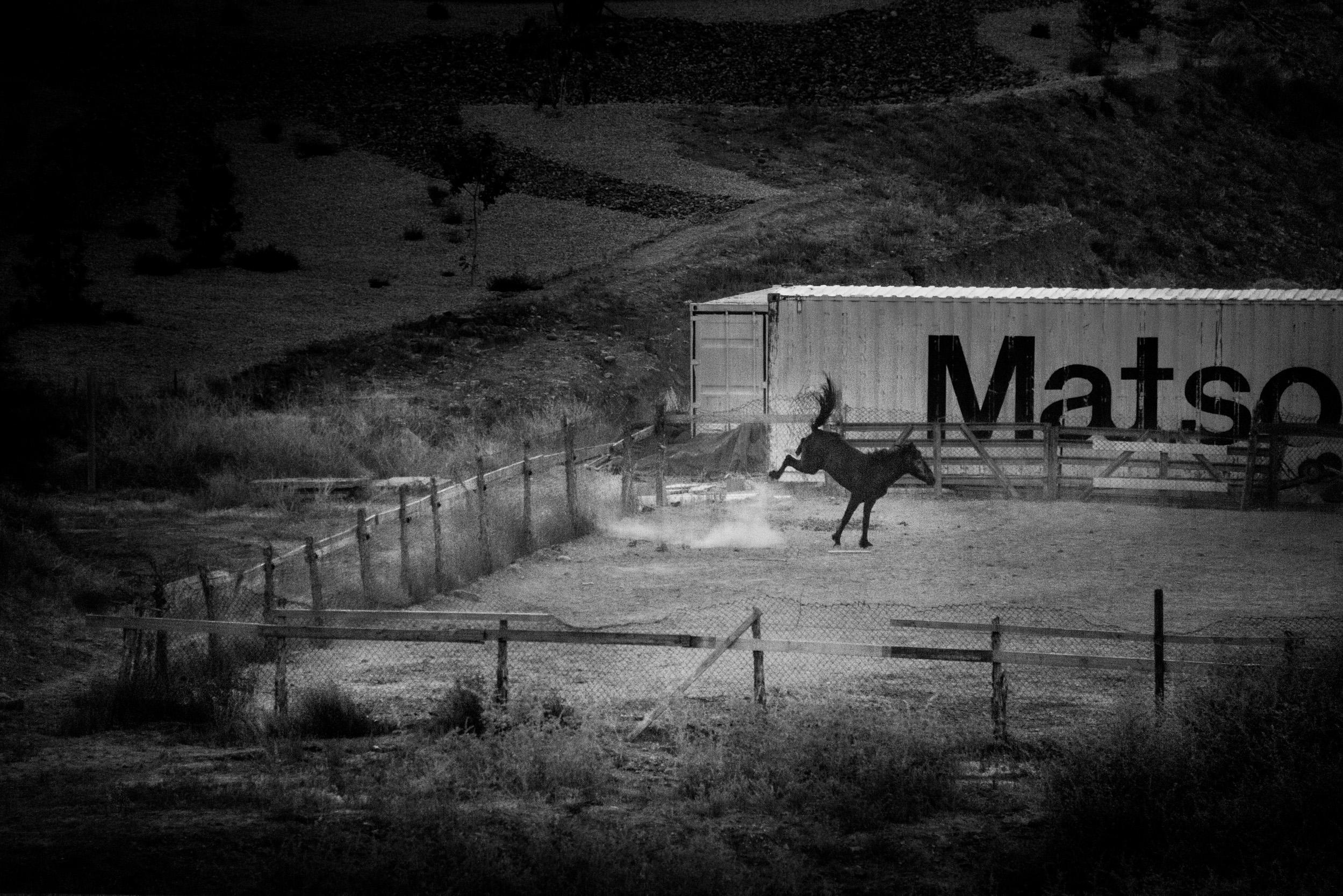 Horse Bucking, Saint George, Utah  © Robert Welkie 2018
