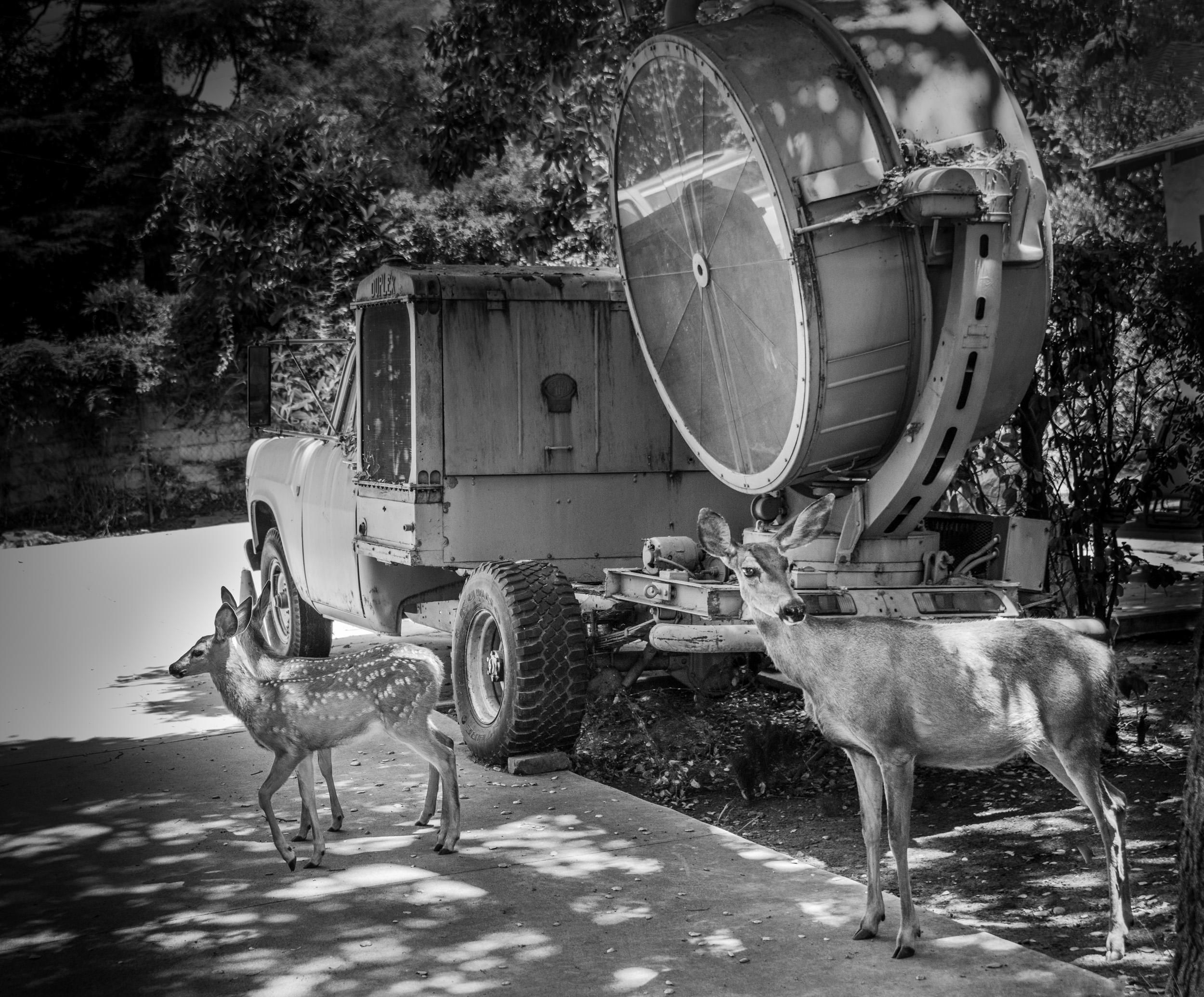 Deer and Spotlight, Monrovia, California © Robert Welkie 2018