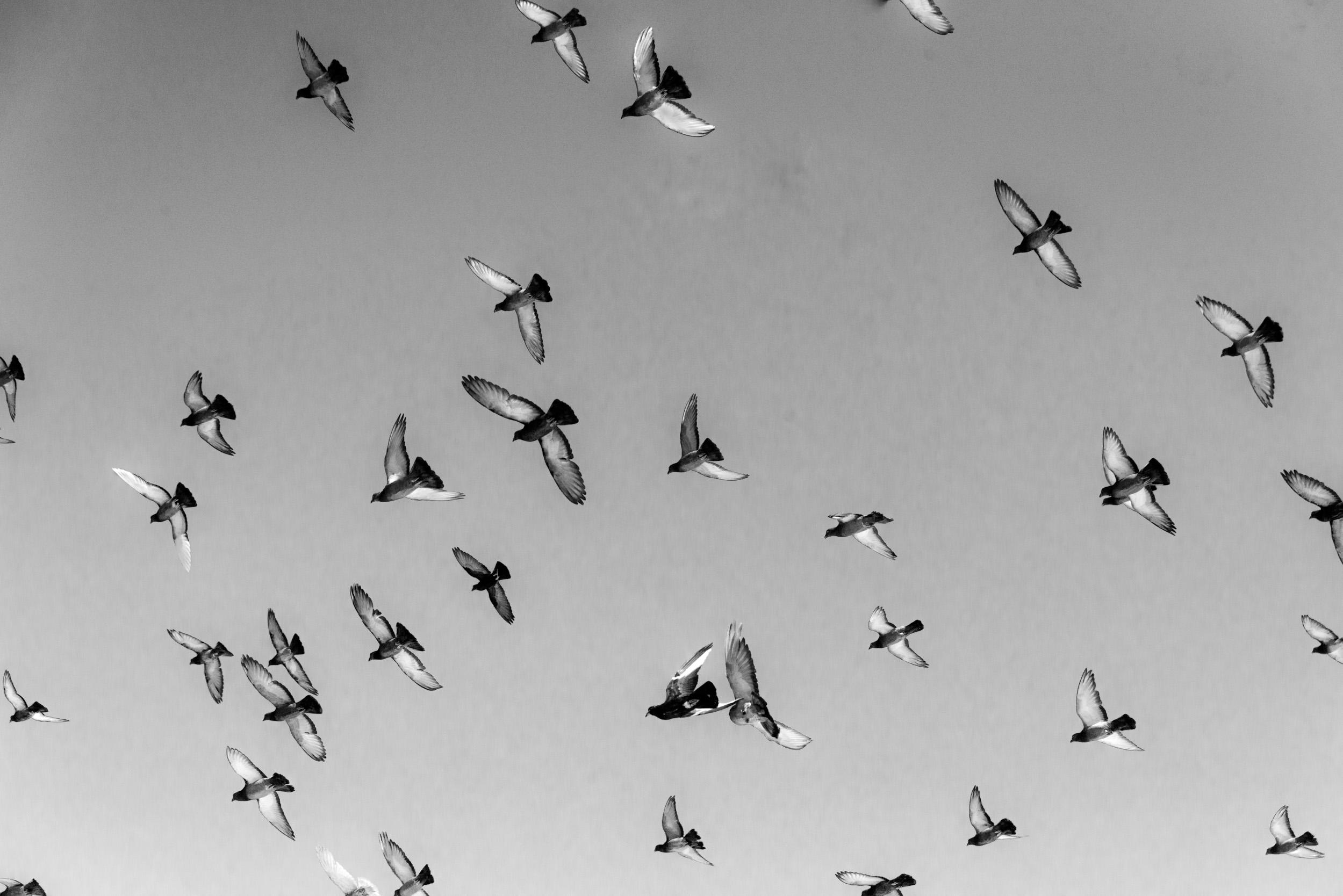 Birds, Logan, Utah  © Robert Welkie 2018