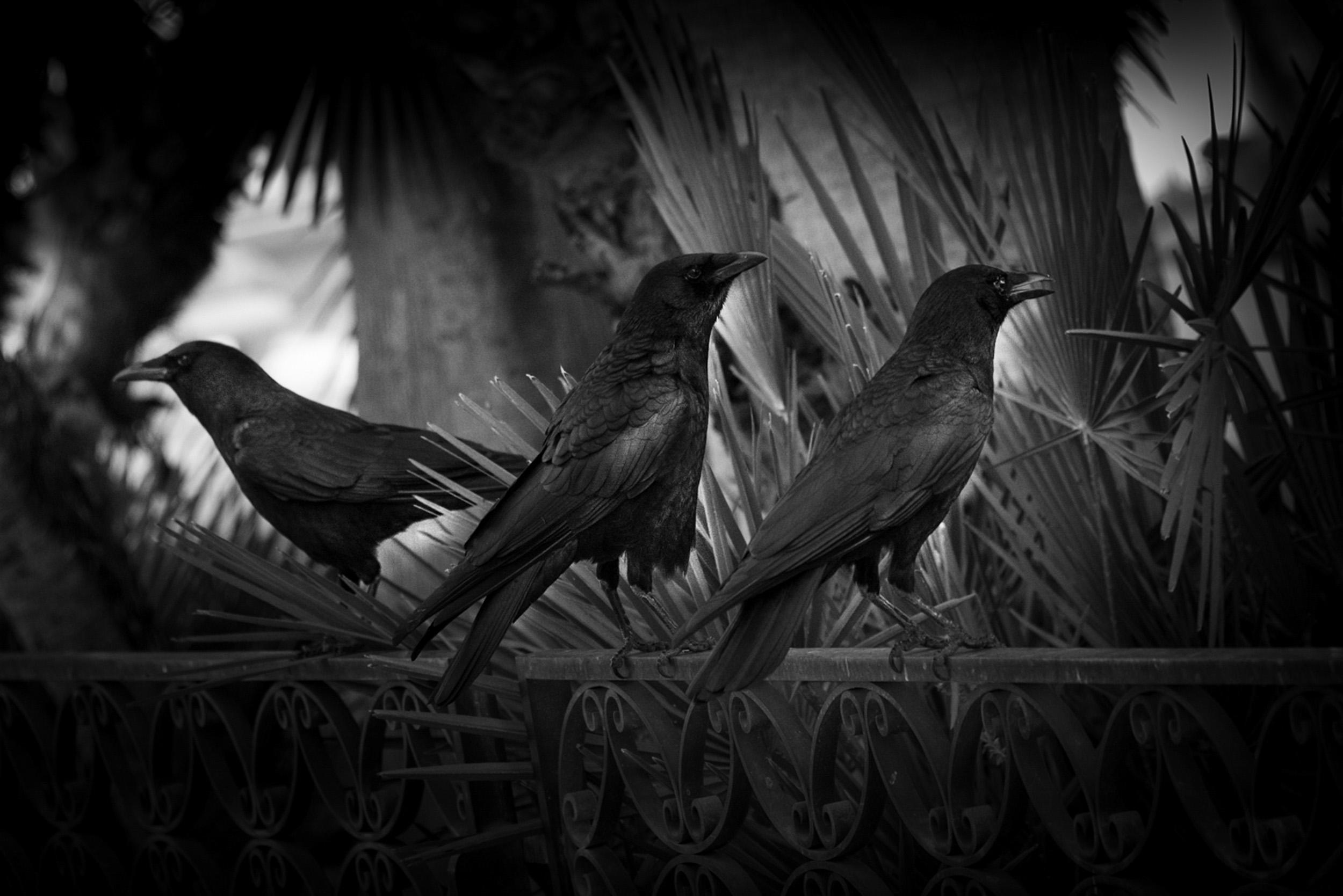 Birds at the Timken Museum, San Diego, California  © Robert Welkie 2018