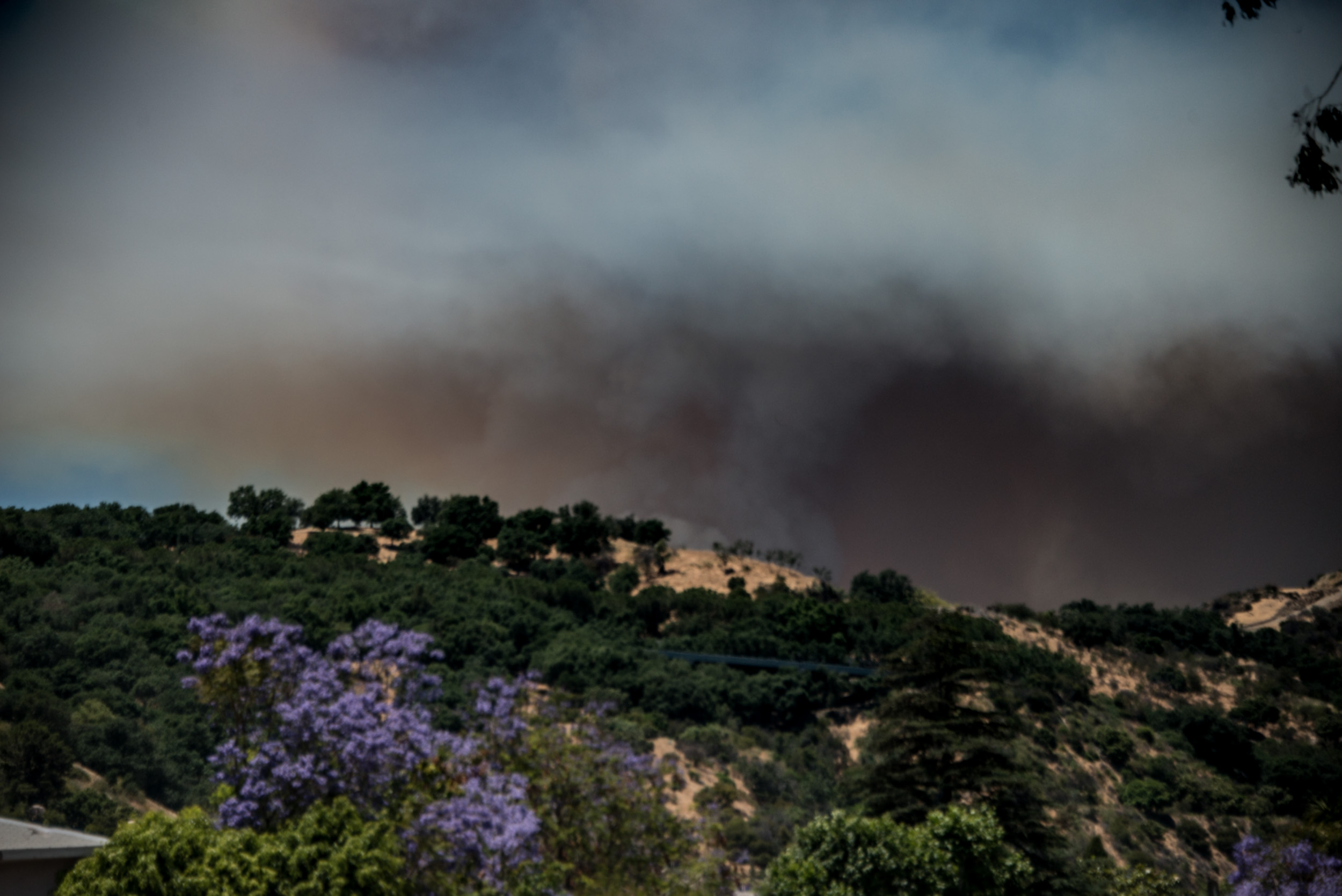 Getty Fire Smoke and Jacaranda Tree © Robert Welkie 2017