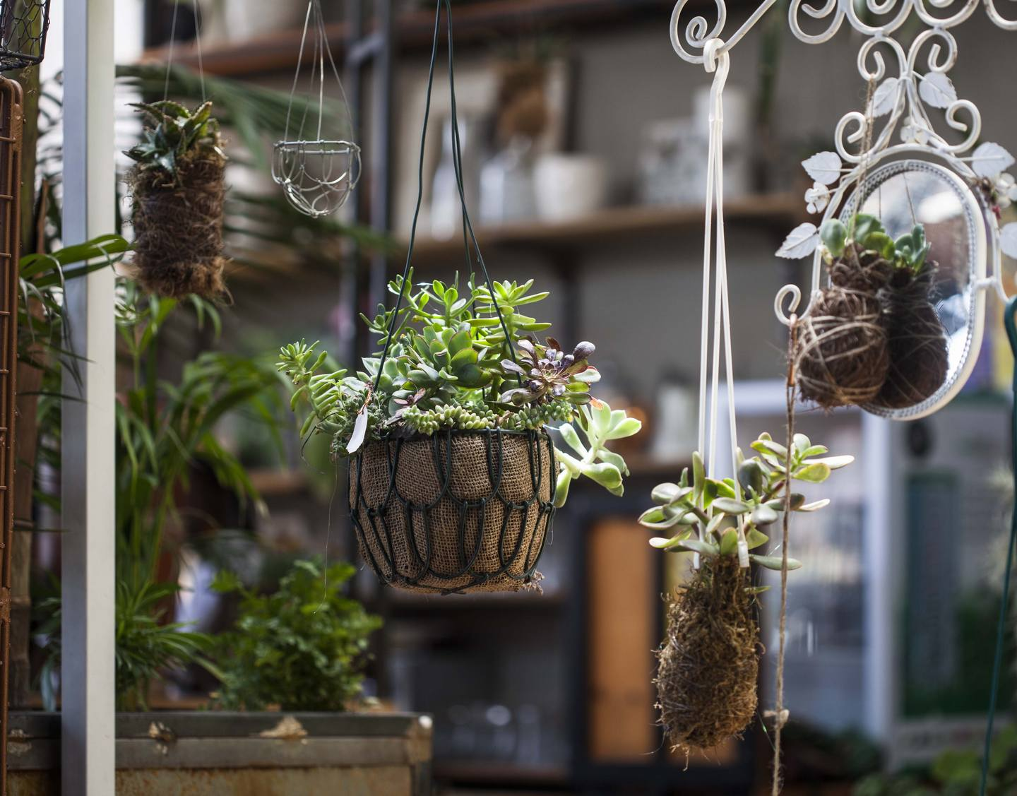 Hanging Plants Living Room Design
