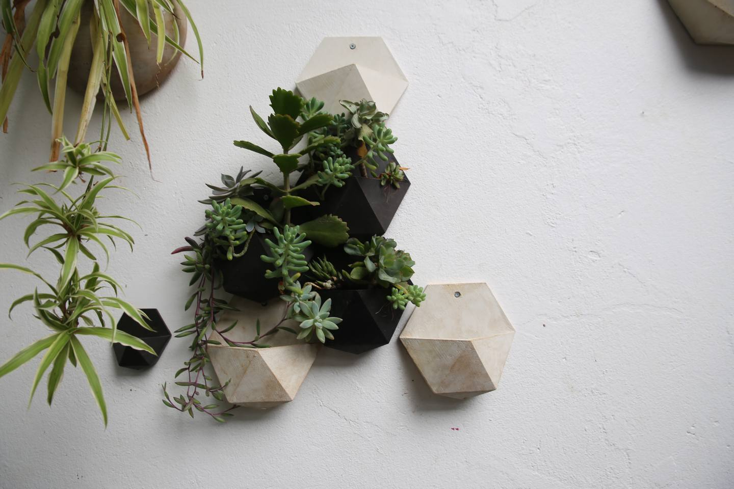 Hexagonal Wall Planters Living Room Design
