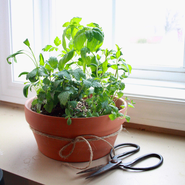 Check out this super cute mini tea garden in a simple ceramic pot!