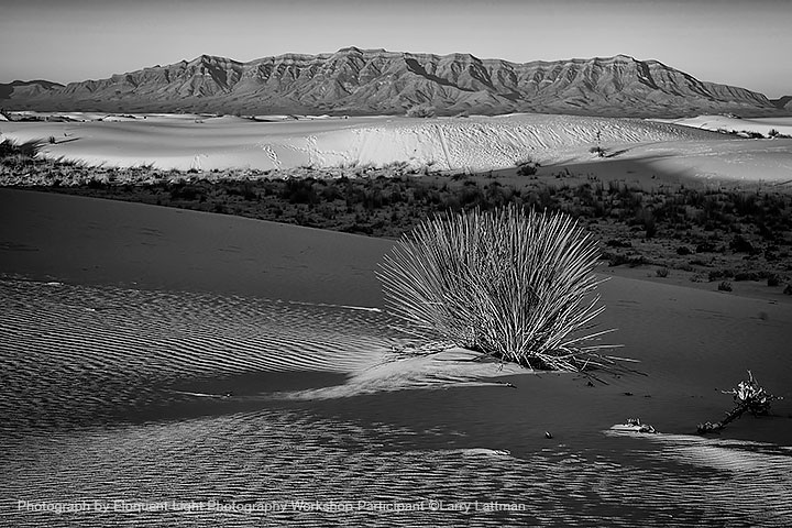 Yucca plant and San Andres Mountains, White Sands National Monument, New Mexico 2014  Photograph by ©Larry Lattman