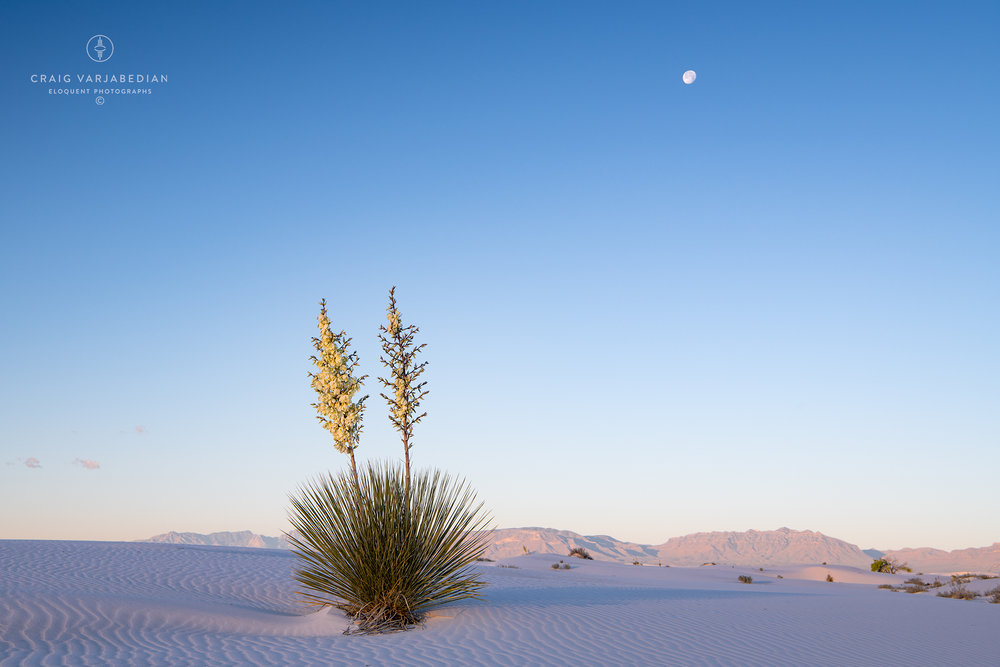 Yucca-and-Moon_DSC8016-White-Sands.jpg