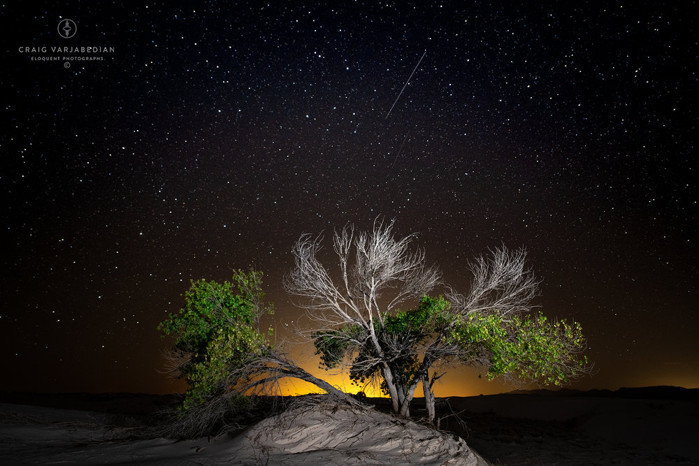 Cottonwood-and-Stars-White-Sands-DSC9346.jpg