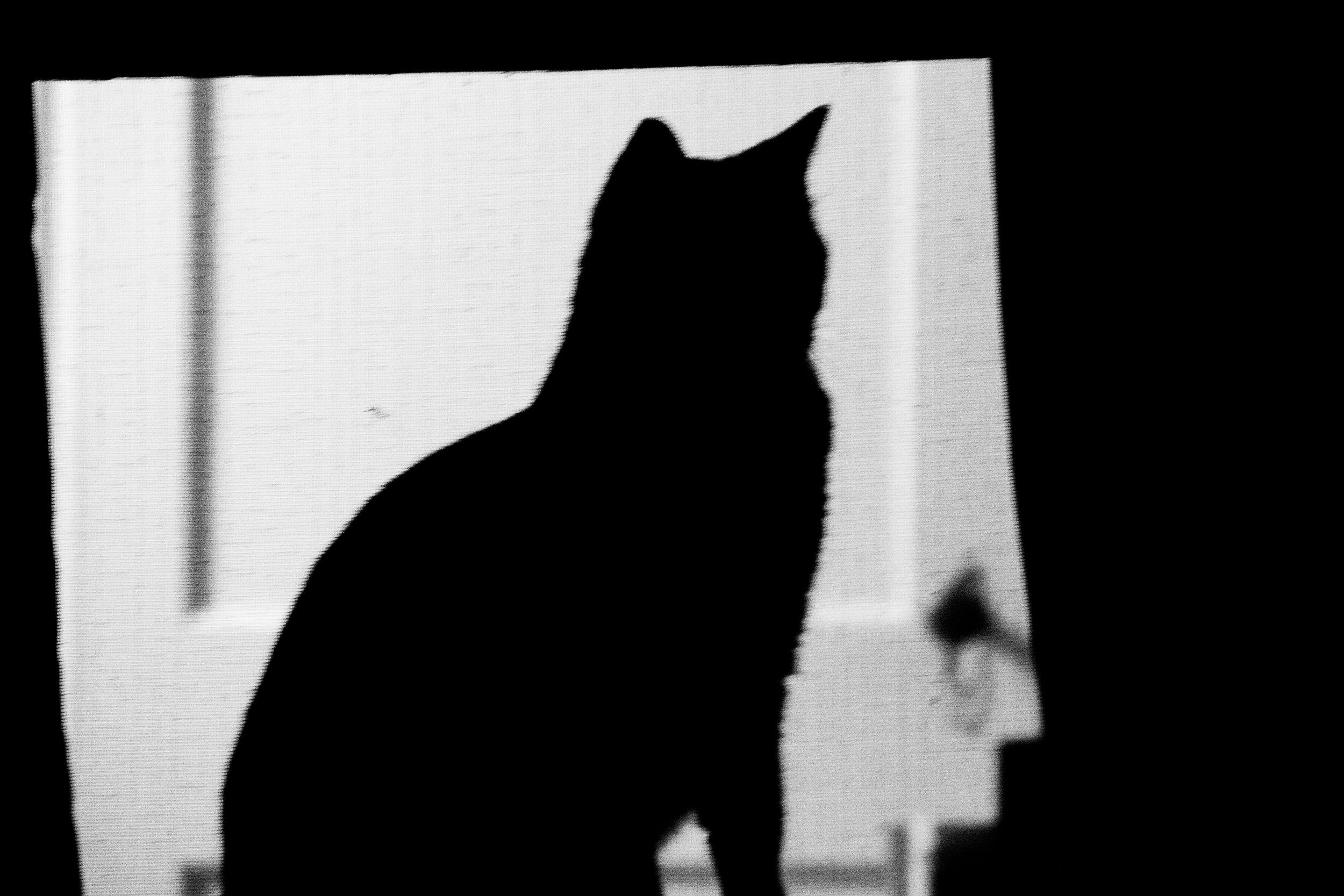 Pablito Silhouette-2.jpg