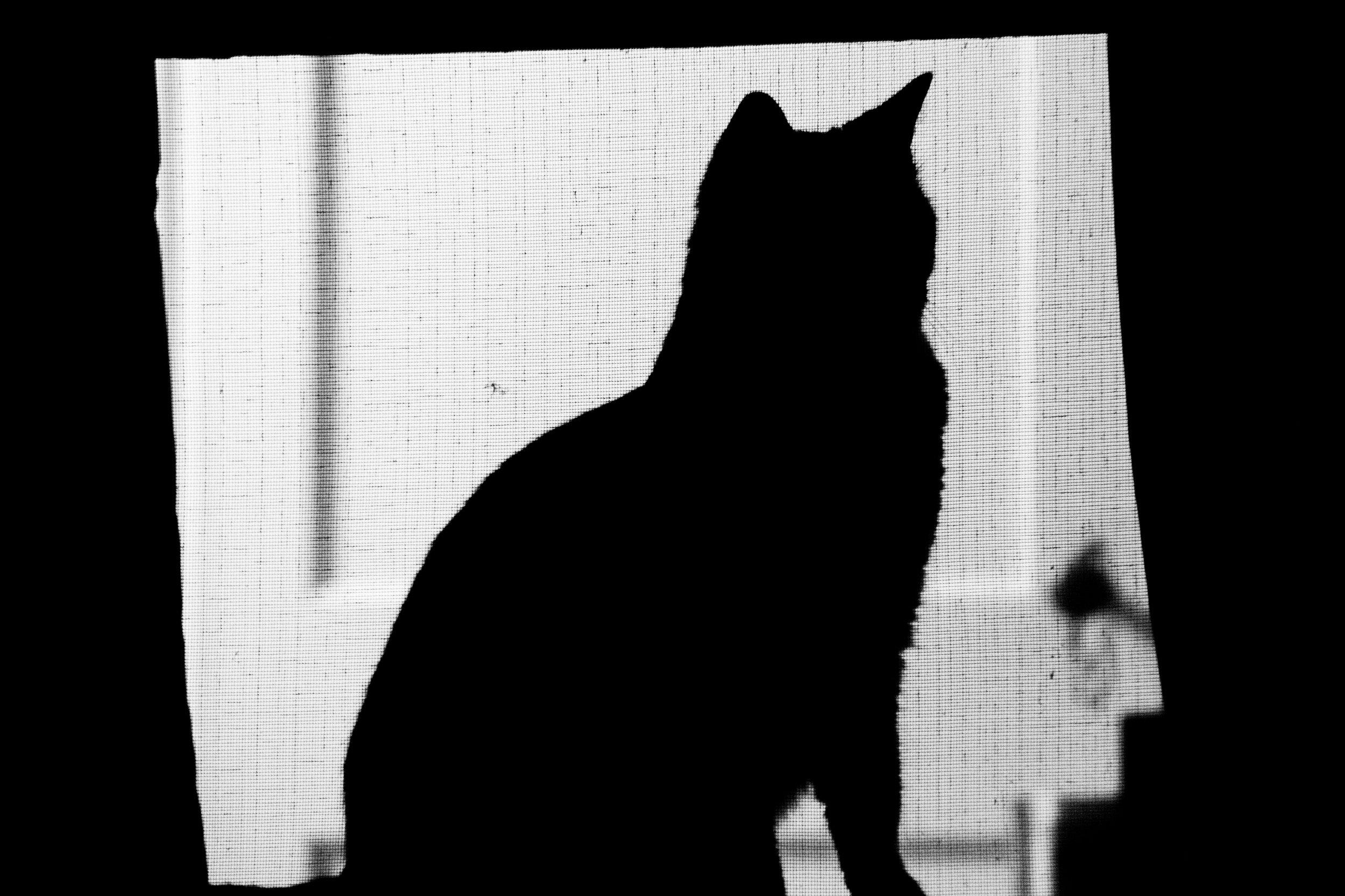 Pablito Silhouette-3.jpg